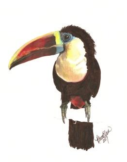 Oskar's toucan