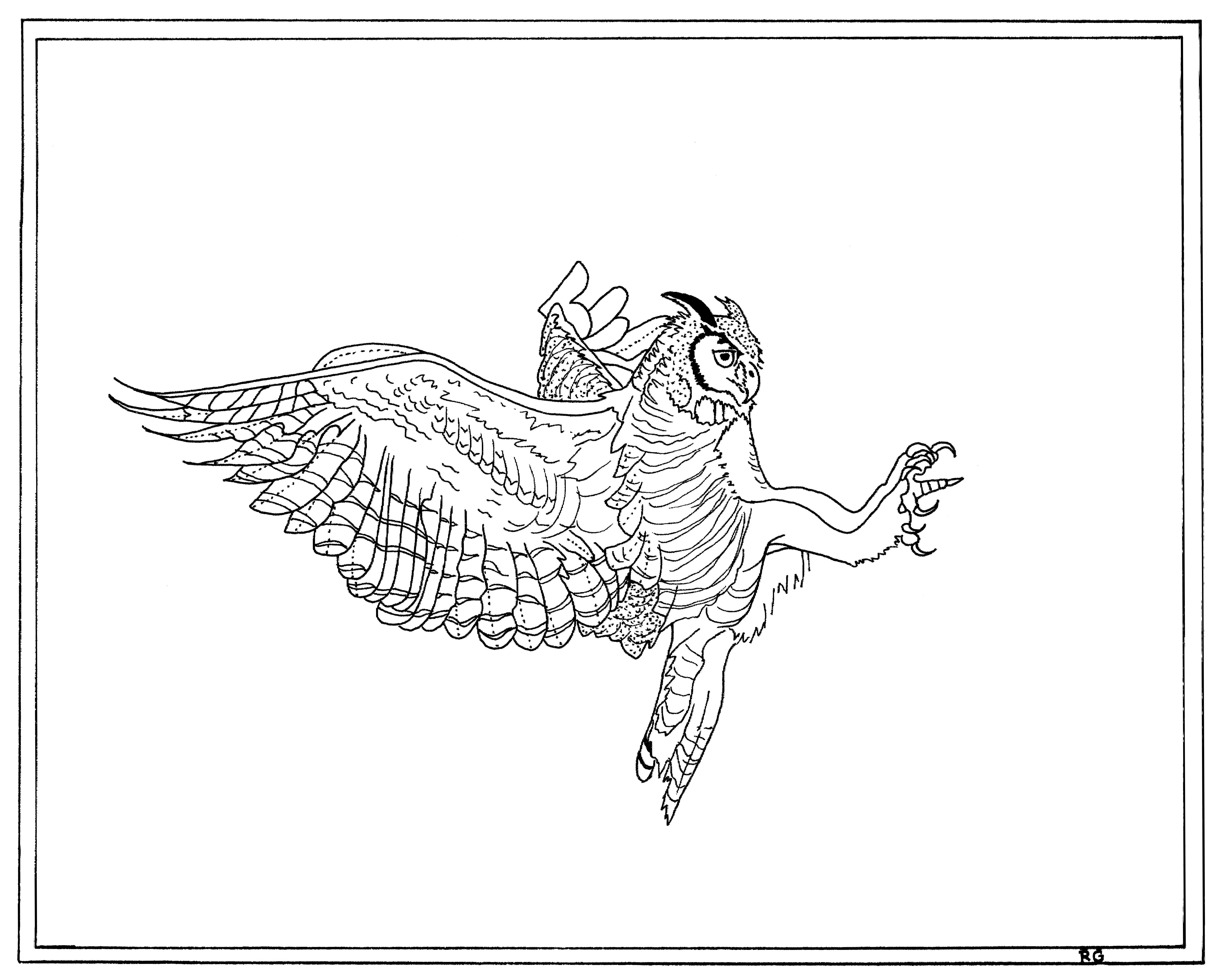 Great Horned Owl Line Drawing