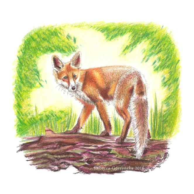 red-fox-smwm